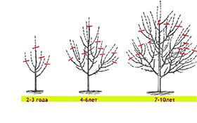 Курс Обрезка плодовых деревьев