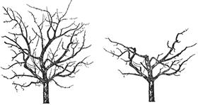 Курс Обрезка старого сада