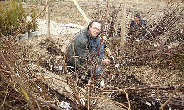 Мы любим свою работу! В питомнике вы можете купить саженцы яблонь и других плодовых деревьев.
