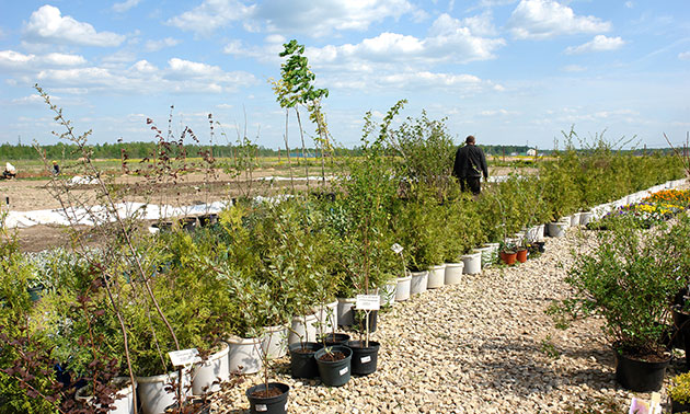 Мы предложим Вам саженцы деревьев, кустарников и рассаду цветов.