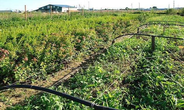 Питомник растений в 102-х км от Москвы — широкий ассортимент саженцев растений.