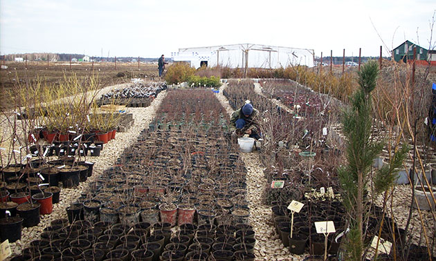 Одной из своих основных задач мы ставим просвещение садоводов по поводу новых сортов плодовых растений.
