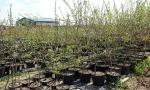 В питомнике растений «Мишково» мы предложим Вам саженцы деревьев и кустарников, которые прошли проверку в наших климатических условиях.