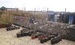 Питомник растений «Мишково» — широкий ассортимент саженцев плодовых деревьев.