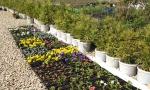 В питомнике «Мишково» Вы можете приобрести рассаду однолетних и многолетних цветов.