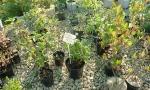 При покупке растений у нас каждый покупатель не только получает саженцы, но и рекомендации по посадке и уходу.